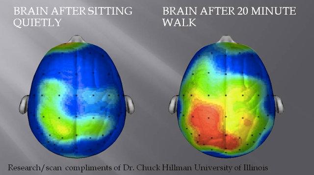brainexecice